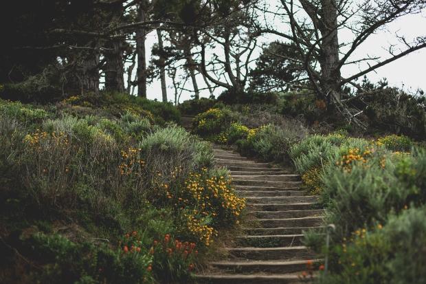 Point Lobos 8